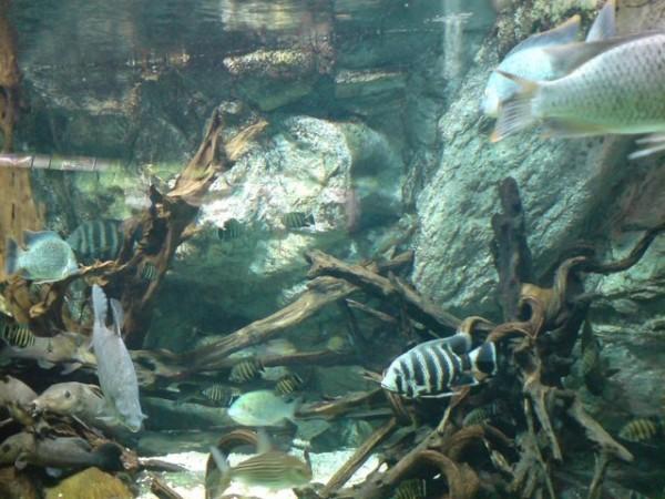 aquarium-porte-doree